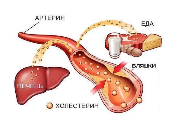 Что такое холестерин