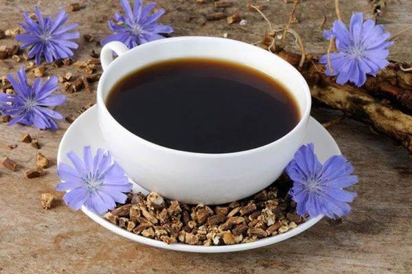 Цикорий — вариант для замены кофе